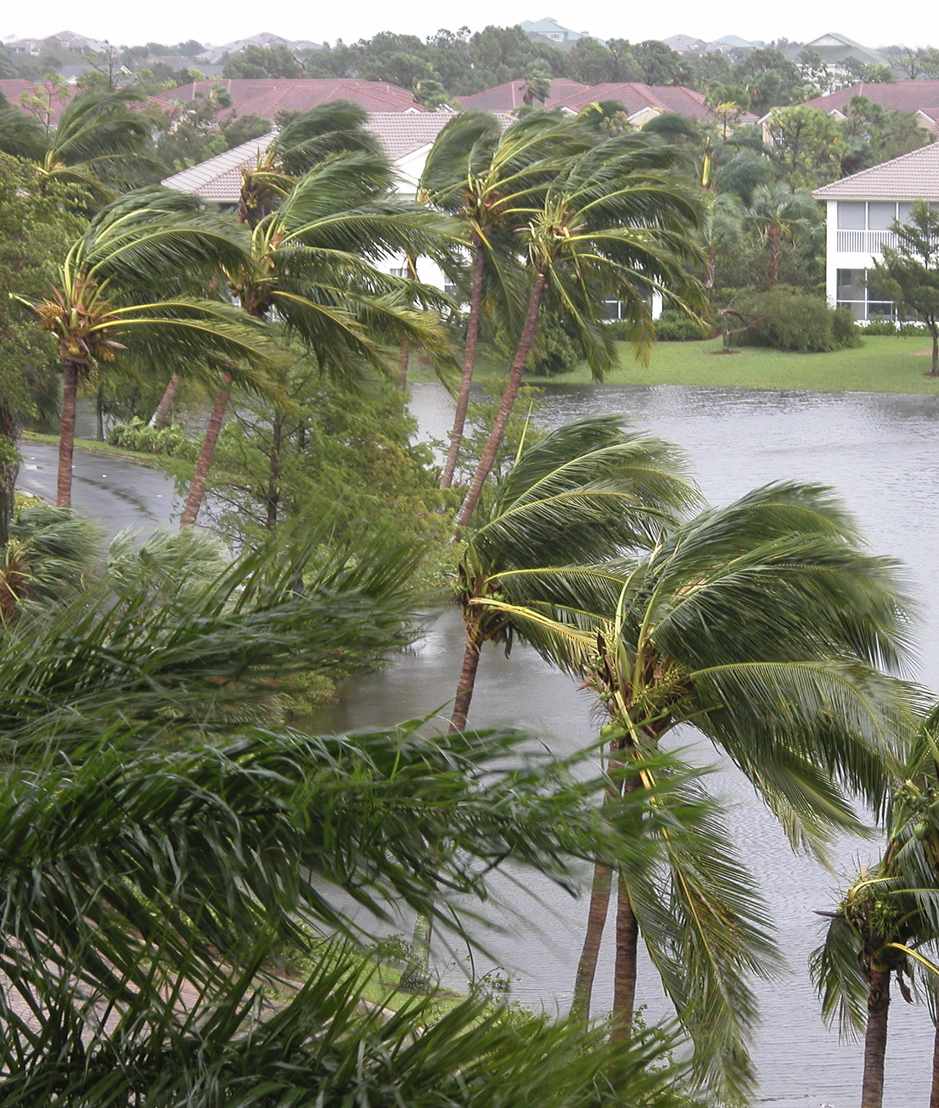 How long can trees and palms survive flooding and heavy winds before injury results?