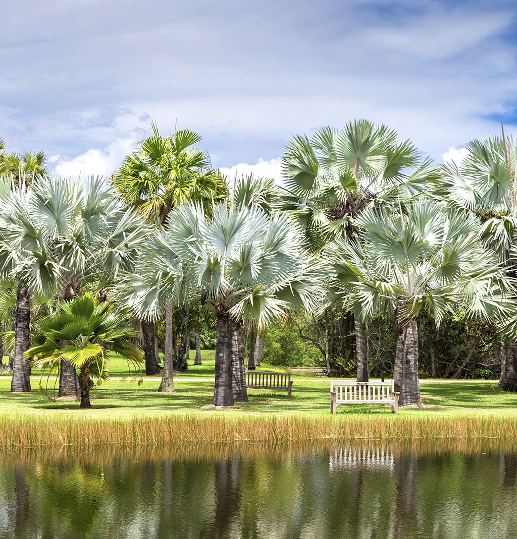 Choosing The Right Palms For Your Landscape