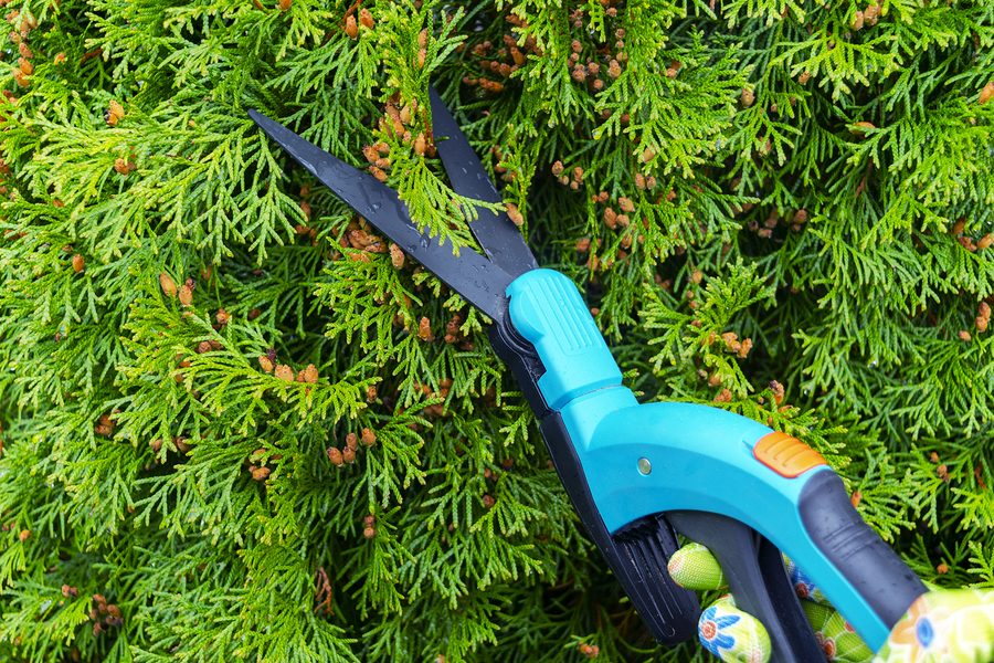 How Regular Tree Pruning Improves The Health And Growth Of Shade Trees