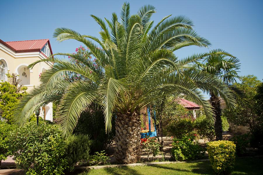 How Tree Companies Fix Yellowing Palms