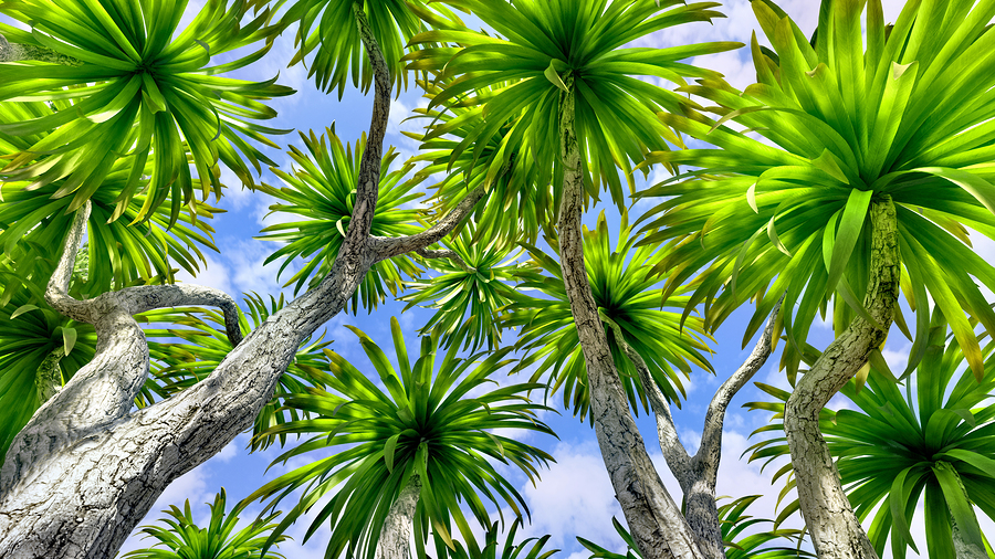 The Best Cold-Tolerant Palm Trees For Sarasota