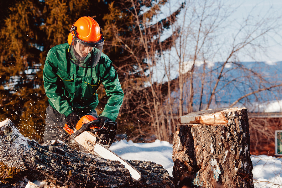 What Exactly Is A Certified Arborist, And How Are They Better?
